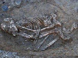 Под Гусевом нашли скелет неизвестной женщины