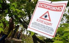 В Гусевском городском округе сократили обработку территорий от клещей