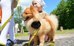 В рамках празднования Дня города в парковой зоне ФОКа пройдёт конкурс «Я и моя собака»