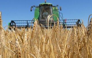 В Гусевском районе отмечается самая высокая урожайность - 43,2 центнера с гектара