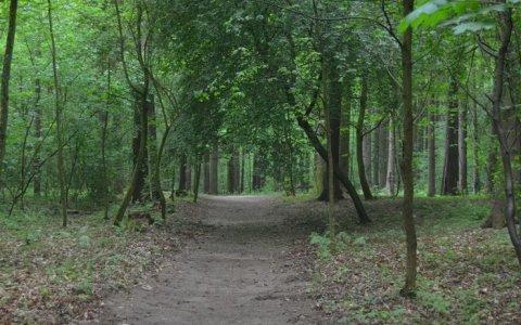 Кому нужен Гресовский лес?